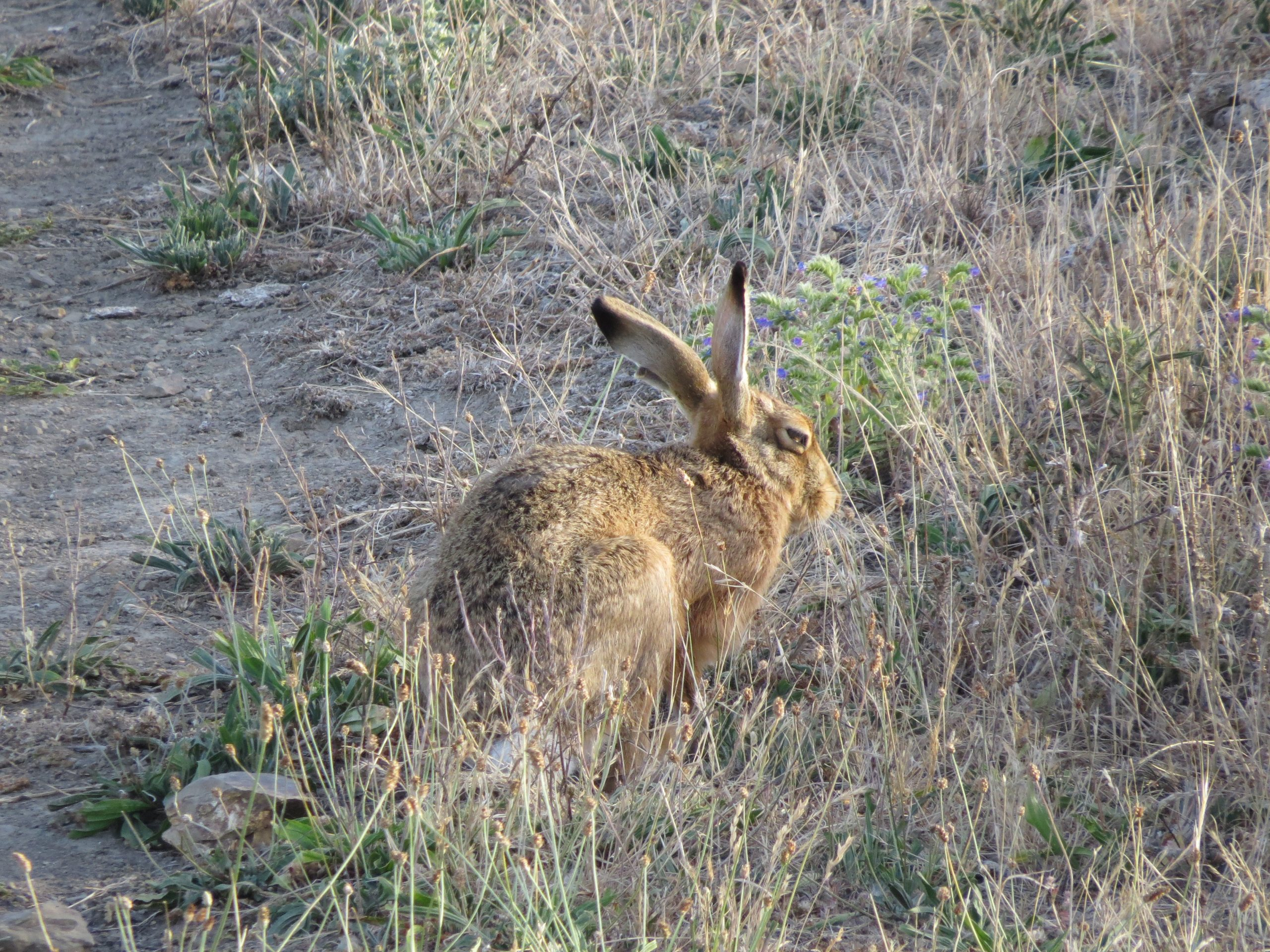 , About a Hare's Ear Nymph