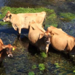 , FARMERS NEED TO CLEAN UP THEIR ACT