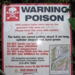 , Is 1080 Harmful to Trout and Stream Ecology?