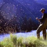 , Scientists Warn of Urgency Action Desperately Needed To Avert Insect Declines
