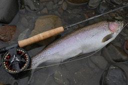 TT River Fly Fishing Taupo