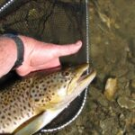 , How Much is a Trout Worth?