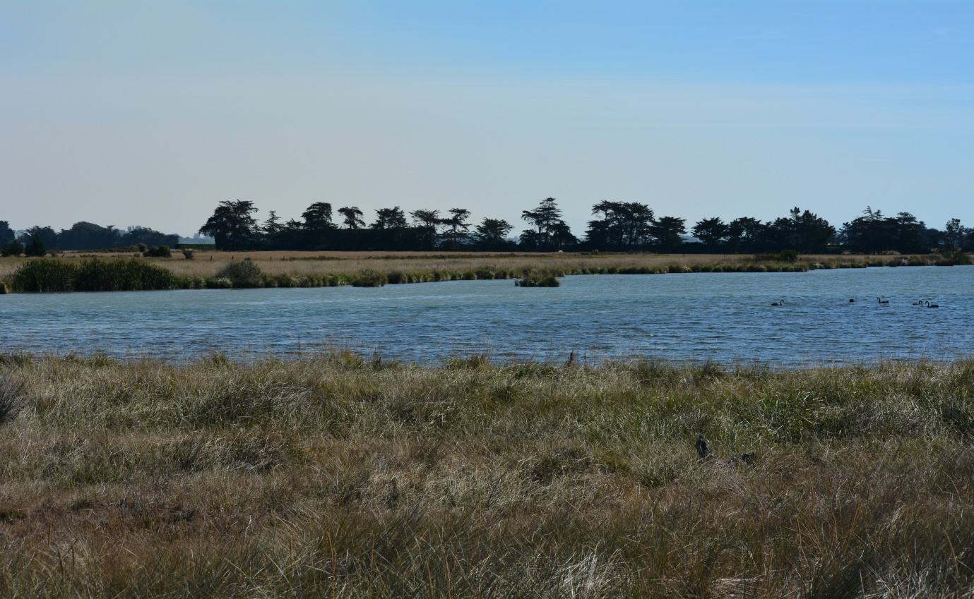 , NZFFA Selwyn Water Zone Nitrate Results 9th March 2021