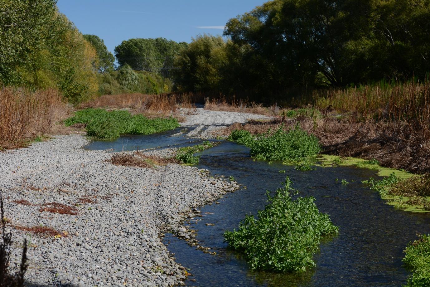 Lower Selwyn River