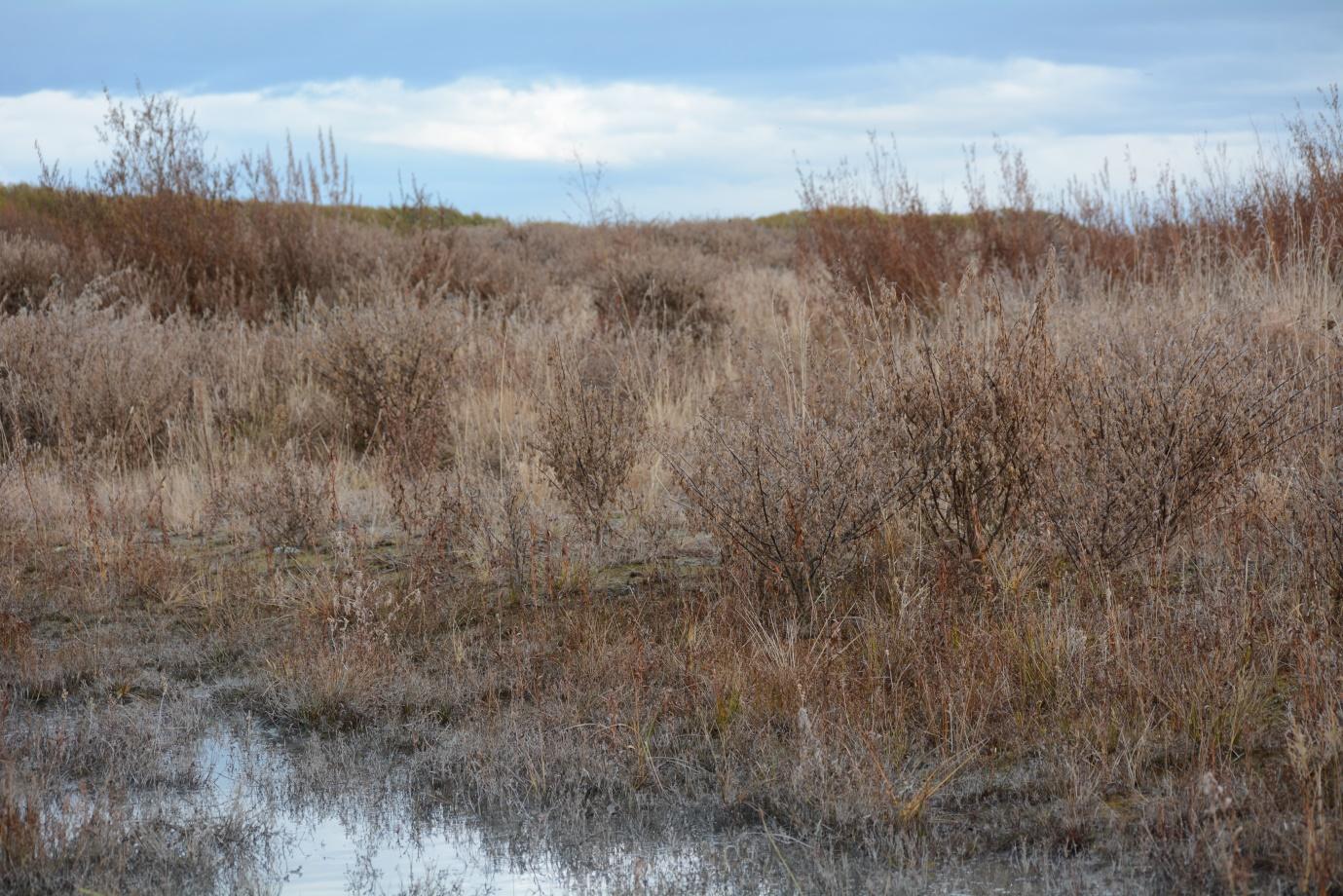 North Rakaia River defoliated March 2021